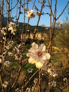 spring. fragrant. limestone