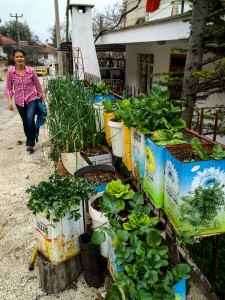 grow your own greens